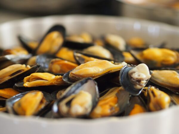 Close up of steamed mussels.